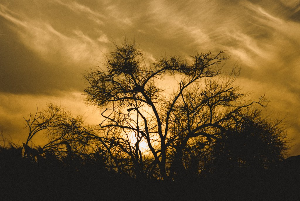 Silhouette-7.jpg