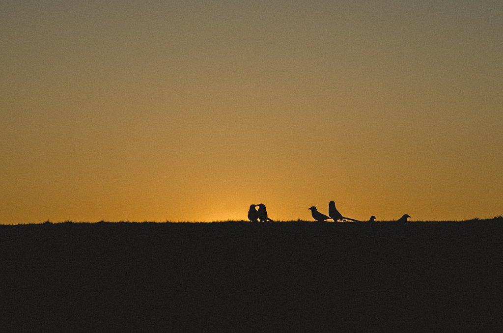 Silhouette-8.jpg